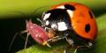 Разведение полезных насекомых
