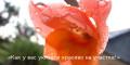 Клумбы, цветники, цветы на моём участке