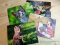 Теперь в России есть эко-открытки, которые радуют и людей, и природу!