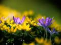 Зачем и как закликать Весну