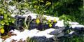 Защита растений от мороза