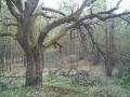 Прогулка к 300-летнему дубу