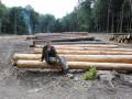 Как у нас лес рубят