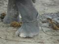 Слоны и веревка